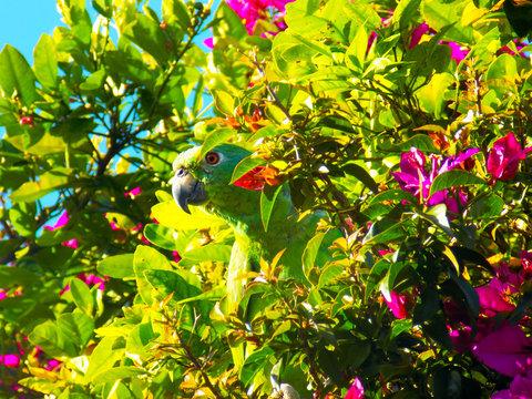 Green Parrot Hide & Seek