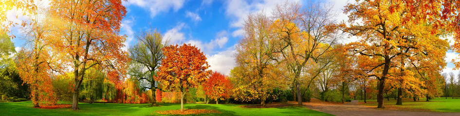 Garden Poster Trees Colorful park panorama in autumn