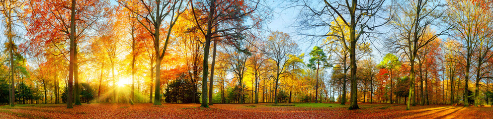 Printed roller blinds Autumn Colorful autumn scenery in a park