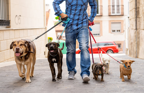 Smiling professional dog walker with dogs on leash on a walk in the city
