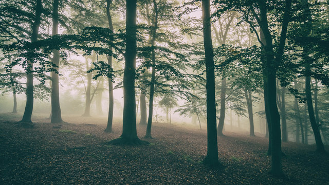 Autumn misty forest