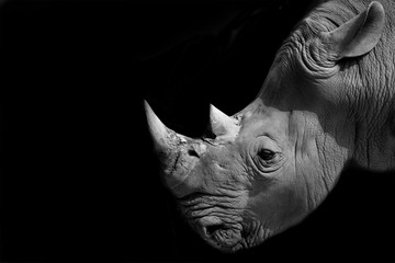 Foto op Aluminium Neushoorn rhinoceros head on black background