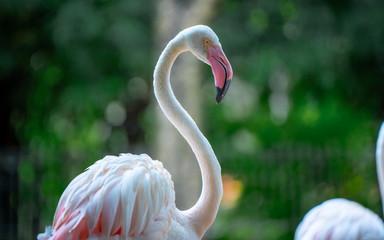 Photo sur Aluminium Flamingo Adorable Pink Flamingo Wildlife Animal