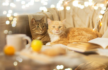Fototapete - pets, hygge and christmas concept - two cats lying on sofa at home in winter