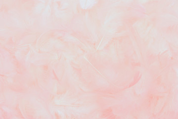 beautiful soft pink feathers background