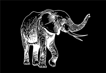 Graphical elephant isolated on black background, vector illustration
