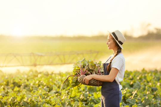 Female farmer with harvest of beetroots in field