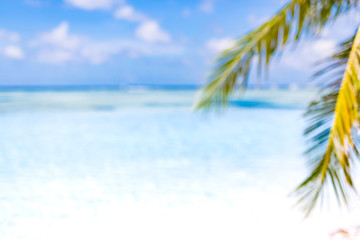 Beach panorama with palm tree as background image Wall mural