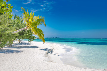 Fototapete - Exotic beach landscape. Paradise beach view, palms and blue sea. Bright nature scenery, white sand, blue sky