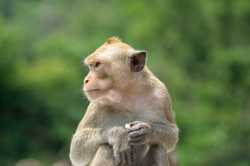 Portrait photo of young monkey is sitting with greenery background.