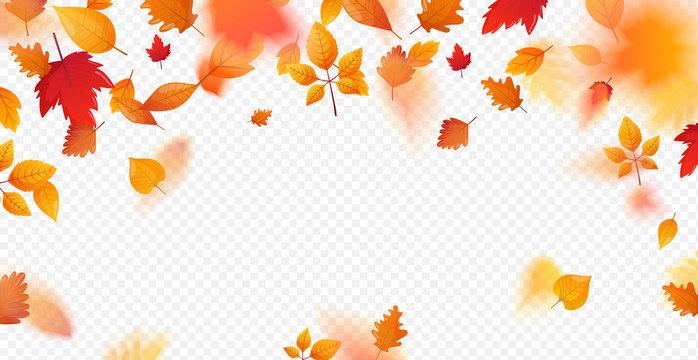 Orange fall colorful leaves flying falling effect.