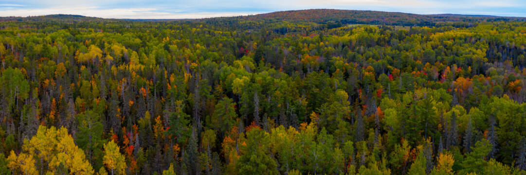 North Woods in the Fall