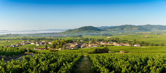 Panoramic view of Brouilly hill, Cercie and Morgon village, Beaujolais, France