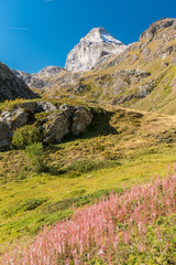 The side of the Granta Parey in the valley of Rhemes in the Alps