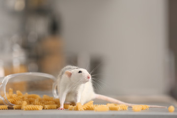 Rat near open container with pasta on kitchen counter. Household pest
