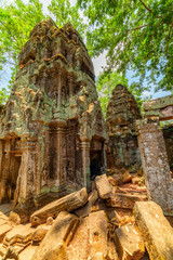 Fototapete - Mysterious ancient ruins of Ta Prohm temple in Angkor, Cambodia