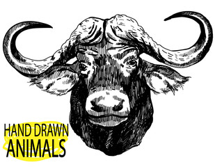 The head of the African buffalo. Large horns, ears. Drawing by hand in vintage style.