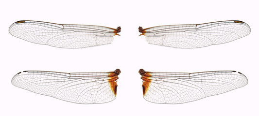 No.09 Dragonfly Wings