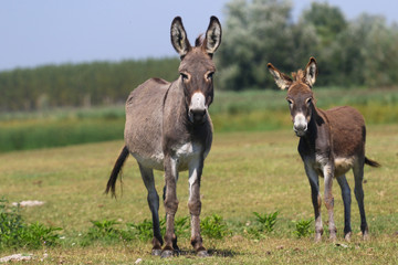Tuinposter Ezel Two curious donkeys on the floral pasture
