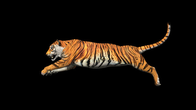Bengal tiger jump in the air pose with 3d rendering include work path for alpha.