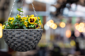 Foto auf Acrylglas Stiefmutterchen pot with colorful pansy flowers hanging in the exterior of the street cafe - image