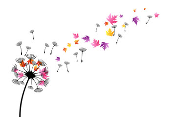 Dandelion with flying colorful autumn leaves and seeds. Vector decoration from scattered elements. Colorful isolated silhouette. Conceptual illustration. Wall mural