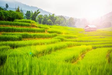 Wall Murals Rice fields beautiful rice field terrace at Chiang Mai