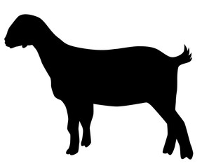 vector of a black goat