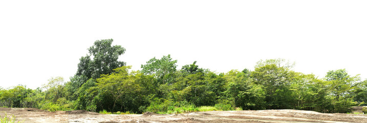 panorama tree forest on mountain rock isolate on white background