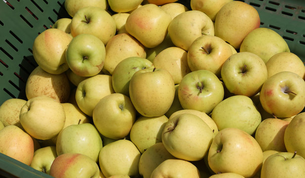 many yellow ripe apples for sale