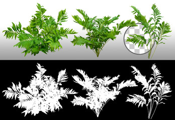Green shrub. Bush of leafy branches. Foliage of plant isolated on transparent background via an alpha channel of great precision. High quality clipping mask for professional composition. Wall mural