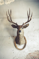 Stores à enrouleur Cerf Deer head on the wall. Taxidermy animal of a deer head and vintage frame on the old rotten brick wall. Vintage style.