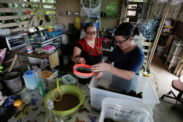 Costa Rican biologist Federico Paniagua and his wife Gabriela work on their insect farm for human consumption, as he is promoting the ingestion of a wide variety of insects, as a low-cost and nutrient-rich food in Grecia