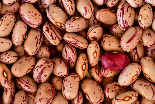 Delicious footage and background of dried quail beans on a heap for preserving