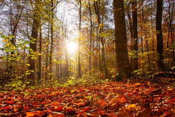 Laubwald in der Sonne