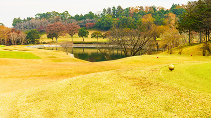 Foto op Canvas Meloen Landscape of Japanese autumn color leaves and lawn ground in autumn Japan