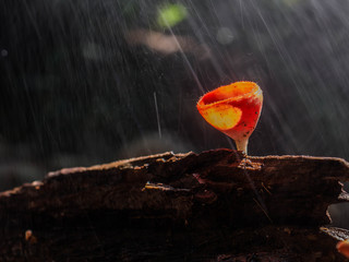 Take a picture of a cute mushroom in the forest.
