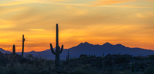 Wall Murals Orange Colorful Desert Sunset & Cactus Silhouette - Arizona