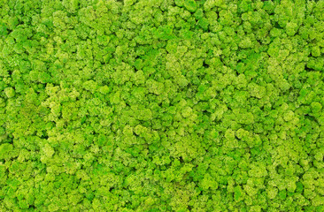 Texture of green moss on the wall in the form of a picture. Beautiful white frame for a picture.