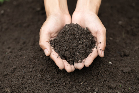 Top view. Farmer holding soil in hands.  The researchers check the quality of the soil.  Agriculture, gardening or ecology concept layout , copy space.