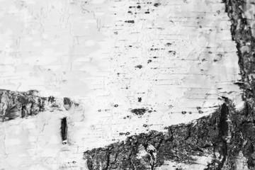 Bark of a birch tree closeup, black and white Fototapete