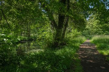 Spazierweg entlang der Panke im Schlosspark Berlin-Buch