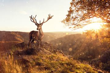 Hirsch zur Herbstzeit auf einer Klippe