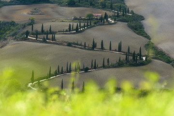 An unusual road between the Tuscan fields and landscapes.