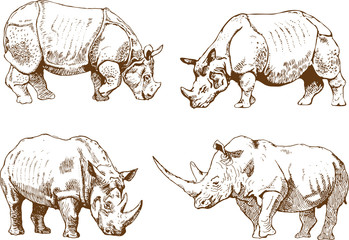 vector image of a wild rhino set in outline art style
