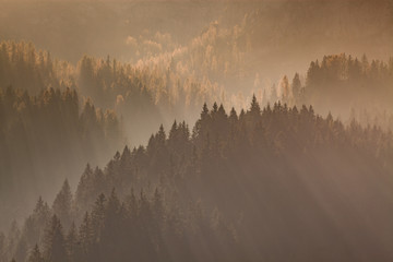 Spoed Fotobehang Ochtendstond met mist sun-rays through misty pine forest