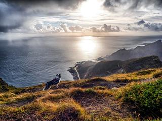 hund schaut auf dem gipfel in reinefjorden auf das meer und die straße