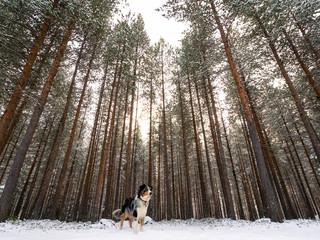 hund steht vor einem wald im winter