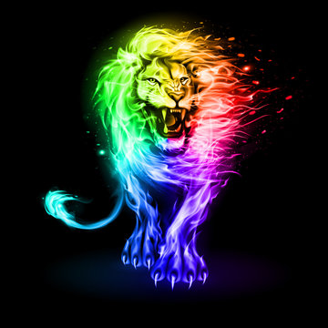 Abstract Illustration of Infuriated Lion with Fire Flames Fur in Rainbow Color on Black Background for Design