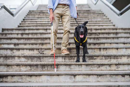 Senior blind man with guide dog walking down the stairs in city, midsection.
